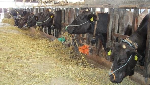 肝付町「スマート畜産」実装プロジェクトの実施について/肝付町